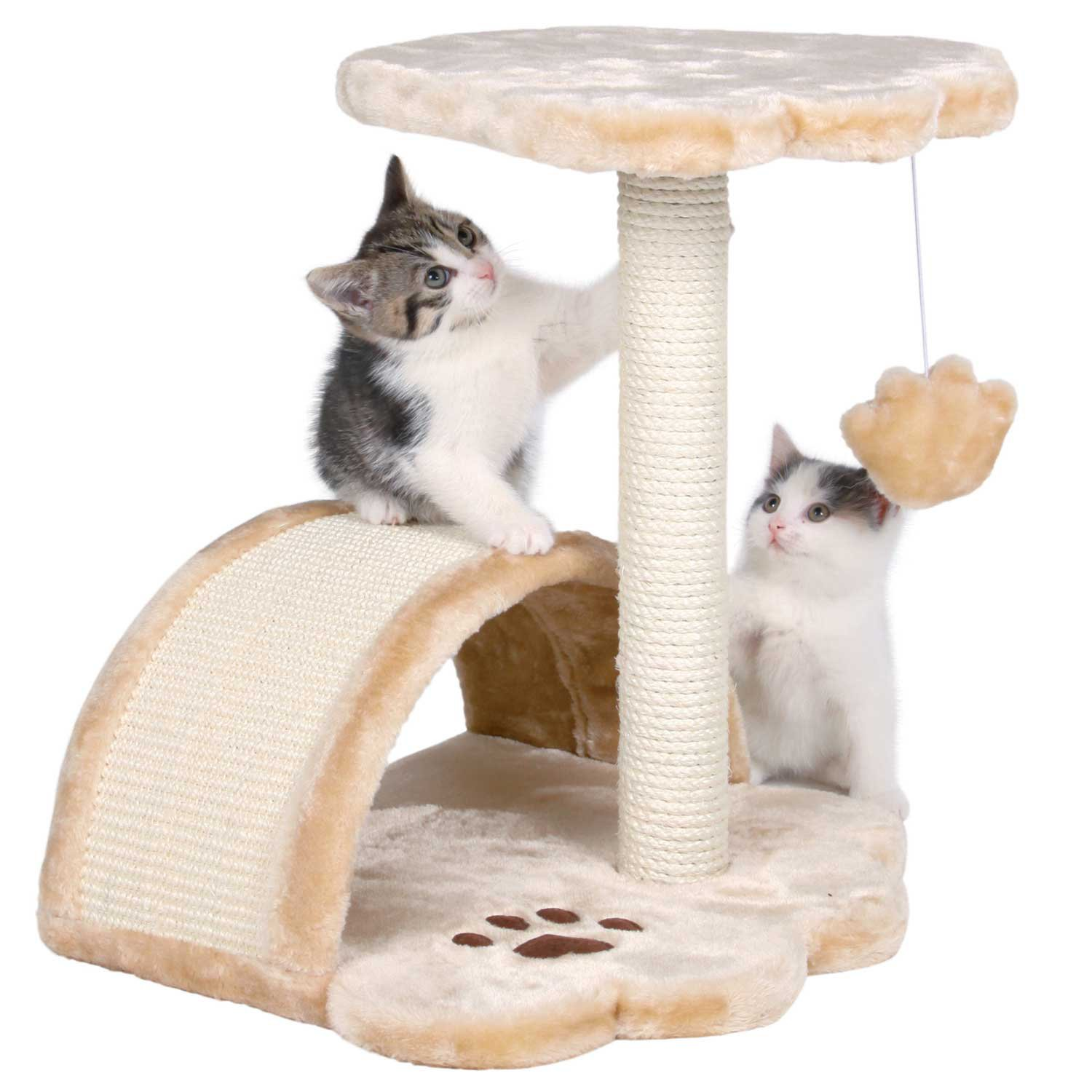 Kitten Scratching furniture