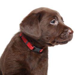 Puppy collars