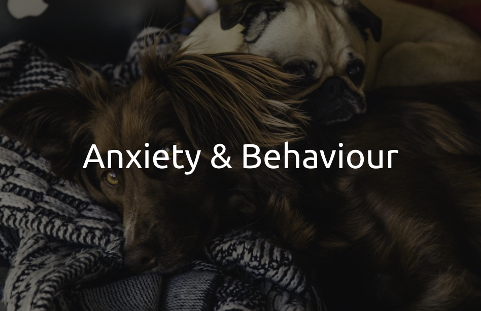 Anxiety & Behaviour