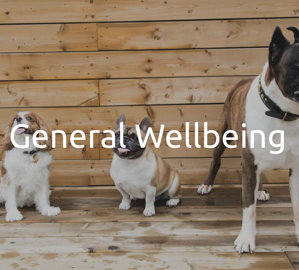 General Wellbeing