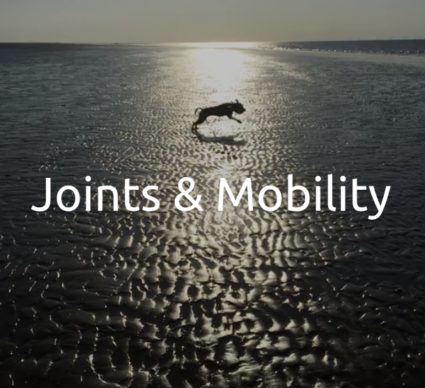 Joints & Mobility