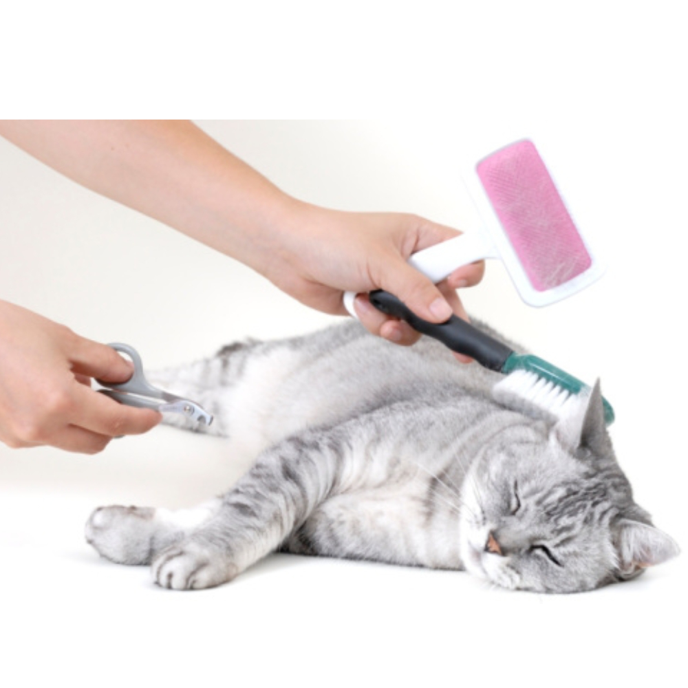 Kitten Grooming Products