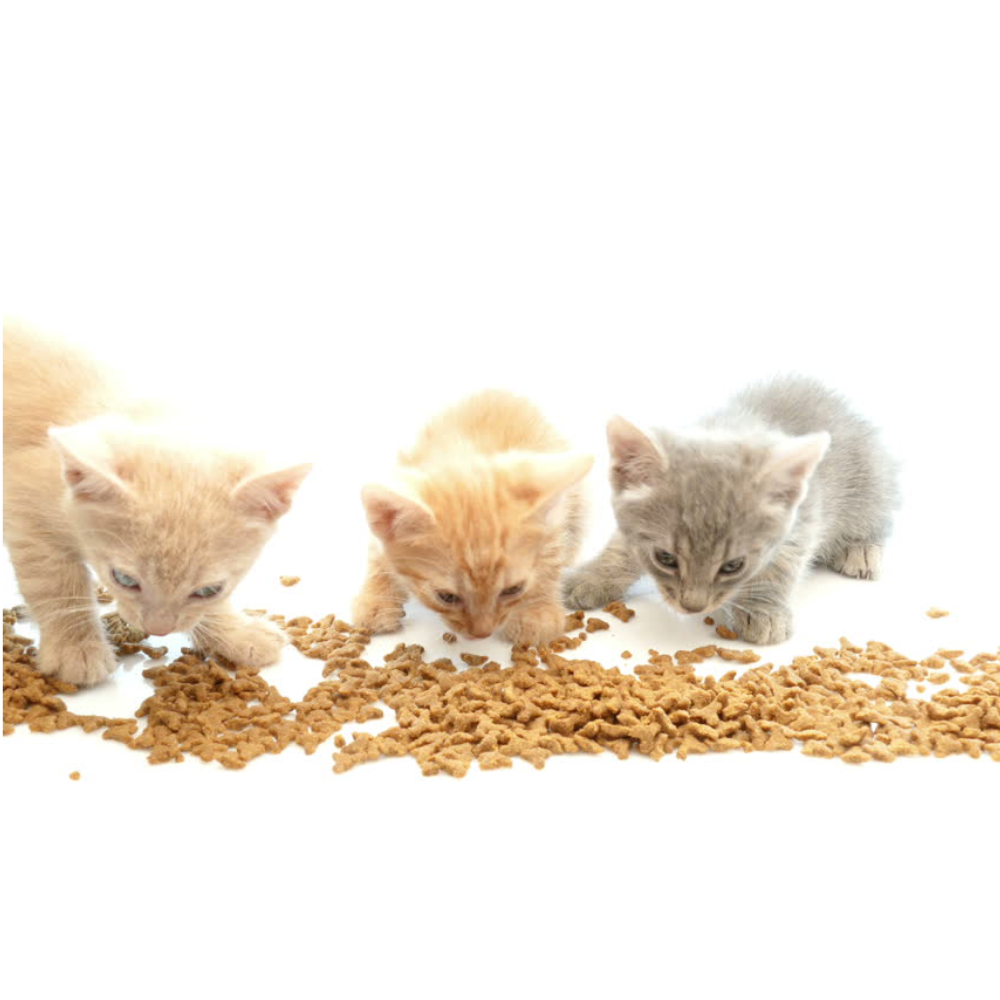 Kitten food and treats